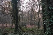 Recreatiepark de Stille Wille